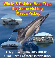 Nashira Uno, GladiatorU and Punta Umbria Boat Trips http://www.losgigantes.com/WhalesAndDolphins.php