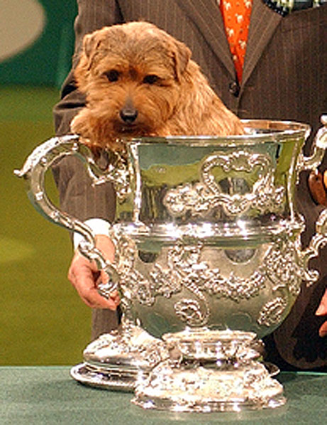 "Tag Archive for ""dog show."" - Los Gigantes News"