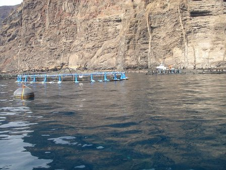 fish-farm-los-gigantes